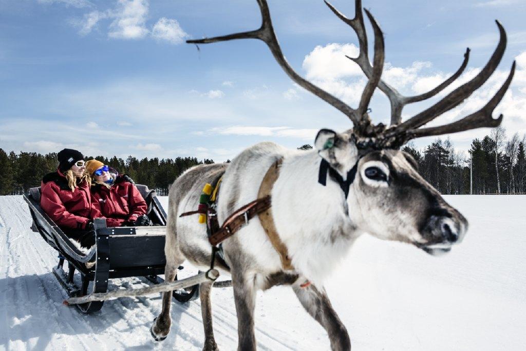 Harriniva Hotels & Safaris Reindeer 10
